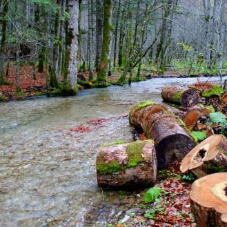 Biogradska Gora en automne